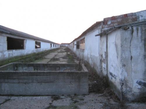 Fosta ferma de porcine situata in Ghiorac, jud. Bihor